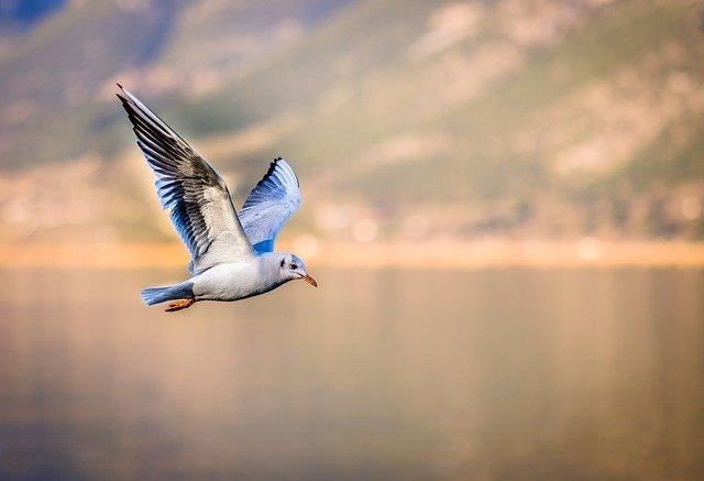 הדמיית הציפור - התגברות על פחד מנהיגה