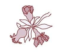 פרח מהו